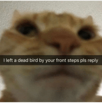Dank Memes, Pls, and Steps: I left a dead bird by your front steps pls reply Thanks @cabbagecatmemes