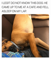Funny, Dog, and Til: I LEGIT DO NOT KNOW THIS DOG. HE  CAME UP TO ME AT A CAFE AND FELL  ASLEEP ON MY LAP Rules say you can't move til he wakes up. https://t.co/cJeKbTn4Ap