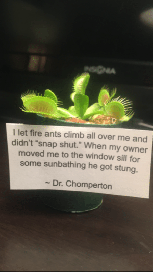"Plant shaming: I let fire ants climb all over me and  didn't ""snap shut."" When my owner  moved me to the window sill for  some sunbathing he got stung.  - Dr. Chomperton Plant shaming"