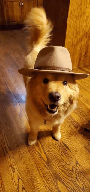 I like to put hats on my grandparents dog, and she likes to wear them (Source): I like to put hats on my grandparents dog, and she likes to wear them (Source)