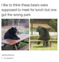 Funny Bear Pictures: I like to think these bears were  supposed to meet for lunch but one  got the wrong park  tastefully offensive  (via driddle07)
