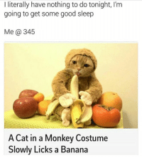 Cats, Memes, and Banana: I literally have nothing to do tonight, I'm  going to get some good sleep  Me 345  A Cat in a Monkey Costume  Slowly Licks a Banana I just have to watch this 🍌🍎🍊 rp @boisobscur