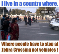 Nepal 😔: I live in a country where,  meme NEPAL  Where people have to stop at  Zebra Crossing not vehicles Nepal 😔