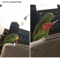 Live, Fear, and I Live: I live in constant fear