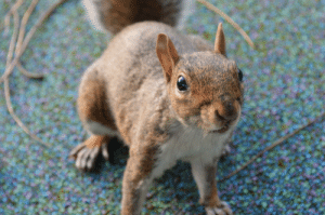 I live near Lambeth park in london. before lockdown I used to feed this cute little guy my flapjack after school, if anyone see's him tell him that I miss him...: I live near Lambeth park in london. before lockdown I used to feed this cute little guy my flapjack after school, if anyone see's him tell him that I miss him...