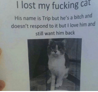 Be Like, Bitch, and Fucking: I lost my fucking ca  His name is Trip but he's a bitch a  doesn't respond to it but I love him and  still want him back  nd Twitter: BLB247 Snapchat : BELIKEBRO.COM belikebro sarcasm meme Follow @be.like.bro
