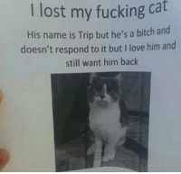 Bitch, Fucking, and Love: I lost my fucking cat  His name is Trip but he's a bitch and  doesn't respond to it but I love him and  still want him back @hilarious.ted is my favourite animal memes page