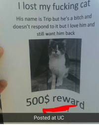 Bitch, Fucking, and Love: I lost my fucking cat  His name is Trip but he's a bitch and  doesn't respond to it but I love him and  still want him back  500$ rew  Posted at UC Trip come back, don't be a lil bitch | Follow @aranjevi for more!