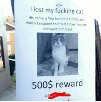 Bitch, Fucking, and Love: I lost my fucking cat  His name is Trip but he's a bitch and  doesn't respond to it but I love him and  still want him back  500$ reward 🤣Legendary