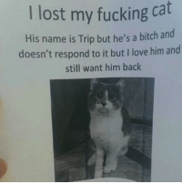 Bitch, Fucking, and Funny: I lost my fucking cat  His name is Trip but he's a bitch and  doesn't respond to it but I love him and  still want him back The king of memes is now on Instagram! Follow @ifunny.co for your daily dose of fun