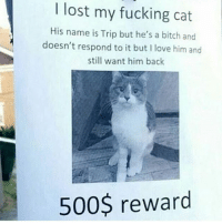 Bitch, Fucking, and Funny: I lost my fucking cat  His name is Trip but he's a bitch and  doesn't respond to it but I love him and  still want him back  500$ reward @x__social_butterfly__x is hilarious