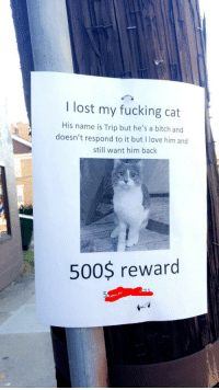 "Bitch, Fucking, and Love: I lost my fucking cat  His name is Trip but he's a bitch and  doesn't respond to it but I love him and  still want him bachk  500$ reward <p><a href=""https://temporarywhales.tumblr.com/post/154863275486/this-sign-has-been-up-by-my-house-for-weeks-and"" class=""tumblr_blog"" target=""_blank"">temporarywhales</a>:</p> <blockquote> <p>This sign has been up by my house for weeks and curiosity got the better of me so i texted the number and:</p> <figure data-orig-width=""722"" data-orig-height=""1280"" class=""tmblr-full""><img src=""https://78.media.tumblr.com/92e7d6974ee18a4a13345e4922b317e4/tumblr_inline_oinoyqcWCR1qmad43_540.jpg"" alt=""image"" data-orig-width=""722"" data-orig-height=""1280""/></figure></blockquote>"