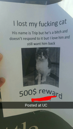 Bitch, Fucking, and Love: I lost my fucking cat  His name is Trip but he's a bitch and  doesn't respond to it but I love him and  still want him back  500$ rew  Posted at UC Someone lost their cat on campus