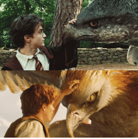 I love all the Harry Potter and Fantastic Beast crossovers! - Who is your favourite character from Fantastic Beasts? - newtscamander jkrowling tinagoldstein queeniegoldstein jacobkowalski credencebarebone fantasticbeasts fantasticbeastsandwheretofindthem harrypotter hermionegranger hypogriff thunderbird frank buckbeak: I love all the Harry Potter and Fantastic Beast crossovers! - Who is your favourite character from Fantastic Beasts? - newtscamander jkrowling tinagoldstein queeniegoldstein jacobkowalski credencebarebone fantasticbeasts fantasticbeastsandwheretofindthem harrypotter hermionegranger hypogriff thunderbird frank buckbeak