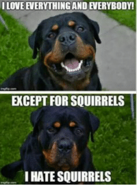 I Love: I LOVE EVERYTHING AND EVERYBODY!  EXCEPT FOR SQUIRRELS  I HATE SQUIRRELS