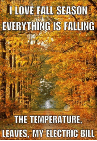Dank, Fall, and Love: I LOVE FALL SEASON  EVERYTHING IS FALLING  THE TEMPERATURE  LEAVES MY ELECTRIC BILL