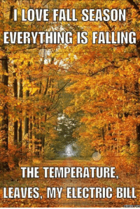 Fall Meme: I LOVE FALL SEASON  EVERYTHING IS FALLING  THE TEMPERATURE  LEAVES MY ELECTRIC BILL  mennes com