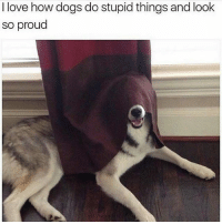 Dogs, Funny, and Love: I love how dogs do stupid things and look  so proud @memes posts the funniest content 😂