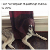 Cats, Crazy, and Dogs: I love how dogs do stupid things and look  so proud Swipe left😂DOUBLE TAP❤ follow @codmemenation (Me) for more! 💯Turn on post notifications 💯 ➖➖➖➖➖➖➖➖➖➖➖➖➖➖➖➖➖➖ ✔ Credit: unknown DM for credit Follow my backup accounts @cod_meme_nation & @animal.angel ➖➖➖➖➖➖➖➖➖➖➖➖➖➖➖➖ ⏬ Hashtags (ignore) ⏬ cod game gaming gamer meme drake dog dogs cat cats trump 2017 battlefield battlefield1 gta gtav gta5 gtavonline comedy savage humor gamers Relatable Hilarious KimKardashian KylieJenner Squad Crazy Omg Epic
