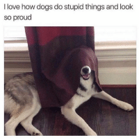 Dogs, Funny, and Love: I love how dogs do stupid things and look  SO proud ⠀