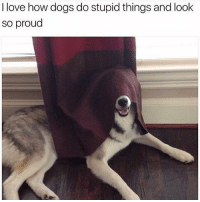 Dogs, Funny, and Love: I love how dogs do stupid things and look  so proud (@memes) is the funniest page on IG!