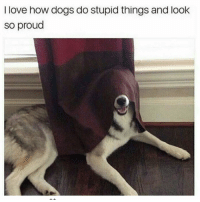 Dogs, Facts, and Love: I love how dogs do stupid things and look  so proud Facts...🐶😂💯 https://t.co/RuXrWJPmuI