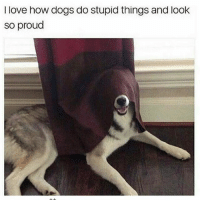 Dogs, Facts, and Love: I love how dogs do stupid things and look  so proud Facts...🐶😂💯 WSHH