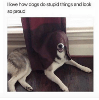 Dogs, Life, and Love: I love how dogs do stupid things and look  so proud Life without dogs would be so dull
