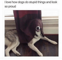 Dank, Dogs, and Love: I love how dogs do stupid things and look  so proud