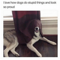 Dogs, Funny, and Love: I love how dogs do stupid things and look  so proud Follow me @hilarious.ted for more animal memes