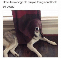 Dogs, Love, and Memes: I love how dogs do stupid things and look  so proud really proud