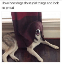 Dogs, Love, and Happy: I love how dogs do stupid things and look  so proud <p>Happy doggo</p>