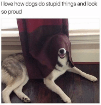 Dogs, Love, and Proud: I love how dogs do stupid things and look  so proud