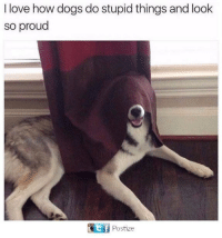 Dogs, Love, and Proud: I love how dogs do stupid things and look  so proud  Eli Postize