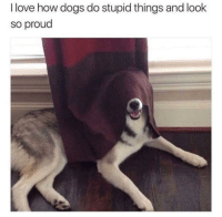 """Dogs, Love, and Http: I love how dogs do stupid things and look  so proud <p>Proud Doggo via /r/wholesomememes <a href=""""http://ift.tt/2rzB3kI"""">http://ift.tt/2rzB3kI</a></p>"""