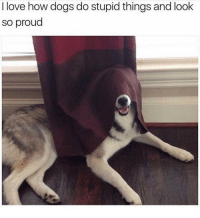 """Dogs, Funny, and Love: I love how dogs do stupid things and look  so proud """"Haha look at me Karen I'm a dumbass 😜"""""""