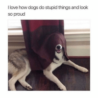 Cute, Dogs, and Love: I love how dogs do stupid things and look  so proud Still cute! 😂