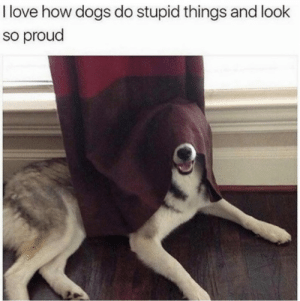 Dank, Dogs, and Love: I love how dogs do stupid things and look  so proud What dog?