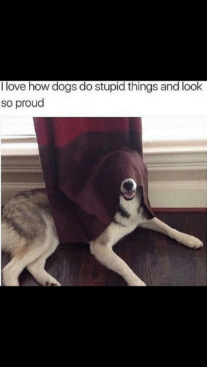Dogs, Love, and Tumblr: I love how dogs do stupid things and look  so proud awesomacious:  He is a good boi