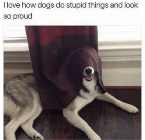 Dogs, Love, and Proud: I love how dogs do stupid things and look  so proud Sneak 100