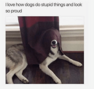 Dogs, Life, and Love: I love how dogs do stupid things and look  so proud 30-minute-memes:Life is good for the good bois