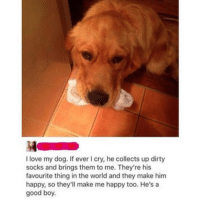 Love, Memes, and Dirty: I love my dog. If ever I cry, he collects up dirty  socks and brings them to me. They're his  favourite thing in the world and they make him  happy, so they'll make me happy too. He's a  good boy. What a good boy