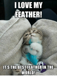 Love, Best, and World: I LOVE MY  FEATHER!  ITS THE BEST FEATHER IN THE  WORLD! Inlove with my Feather