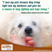"mercola: ""I love my pets because they bring  light into my darkness and give me  a reason to keep fighting and keep living.  CORINNA ELIZABETH, MERCOLA HEALTHYPETS READER  Healthy  With Dr. Karen Becker  Presented by Mercola  Healthy Pets Mercola.com"