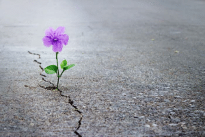 Being Alone, Beautiful, and Love: I love the symbolism of this photo. There is a single beautiful flower that has grown through a crack in the concrete.  It made me think of how our seasons of growth can be. You start out small, like a tiny seed planted in darkness. You may feel alone, and the growing process may be painful, like that flower growing through the crack. In the end it is still standing alone, but it is strong and beautiful.  Moral of the story: you won't always have people supporting you and cheering you on during your seasons of growth. Sometimes you have to go through it alone. And sometimes the most beautiful flower emerges through the darkest, most painful circumstances.   Bloom where you're planted ❤️