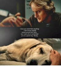 Memes, 🤖, and Marley: I love you more than anything.  don't know exactly  where we go from here...  but want you to remember  youre a great dog, Marley. Marley & Me
