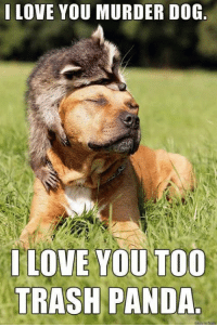 love you: I LOVE YOU MURDER DOG  LOVE YOU TOO  TRASH PANDA