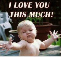Love, Memes, and I Love You: I LOVE YOU  THIS MUCH!