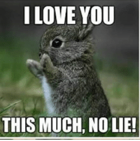 Love, Memes, and I Love You: I LOVE YOU  THIS MUCH, NOLIE