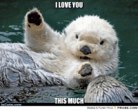 Cute, Fucking, and Funny: I LOVE YOU  THIS MUCH  sCute.com  MEMES & FUNNY Pics  FRABZ.COM so fucking cute